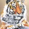 Endangered|Pastel|15x18inches