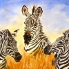 A Study in Sripes-Zebras|Watercolour|18x22inches