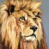 Dartmoor Lion|Pastel|15x18inches
