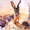 Hare|Watercolour|15x18inches