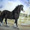 Fizz-Pony-Watercolour