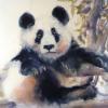 Panda Days|Watercolour|22x16