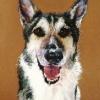 Hund|Pastel|15x18 inches