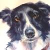 Barney|Watercolour|18x22inches