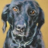 Jethro|Pastel|15x18inches