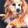 Toby|Pastel|15x18inches