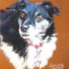 Daisy|Pastel|15x18inches